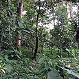 Miraflor reserve in Nicaragua