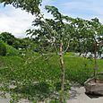 Ometepe in Nicaragua