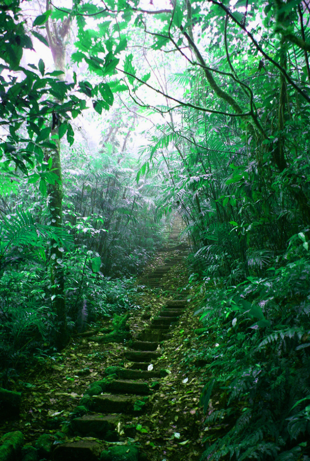 Mombacho Cloud Forest